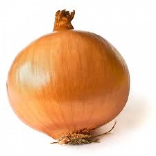 Onion - 1